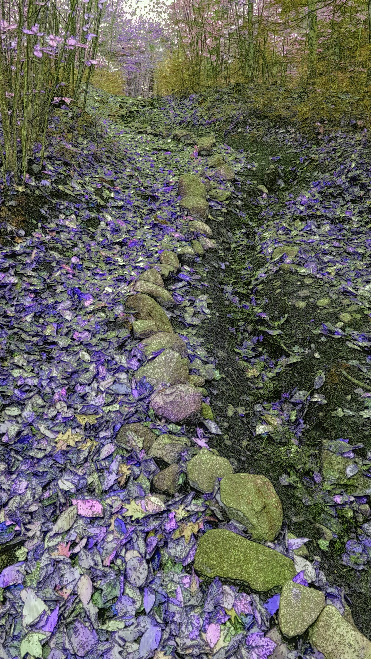 """Purple Path"" Kimberly"