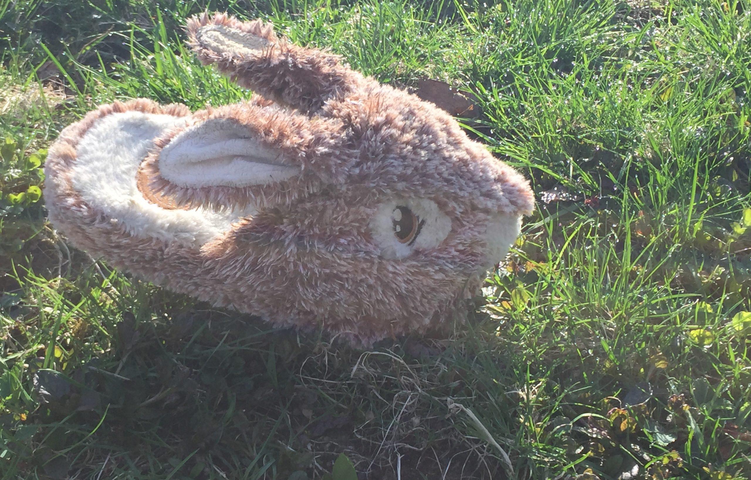 """Wild Rabbit Sighting"" Luna"