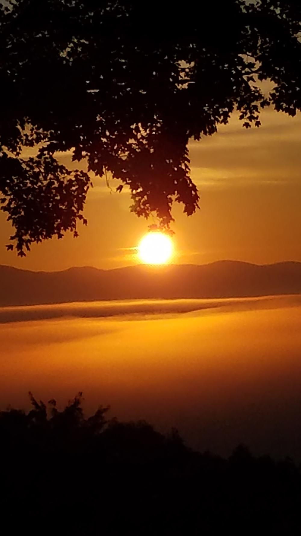 """""""White Mountain Dawn"""" Bee"""