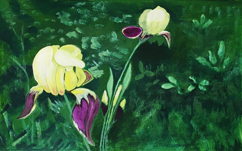 """My Iris"" Alma"