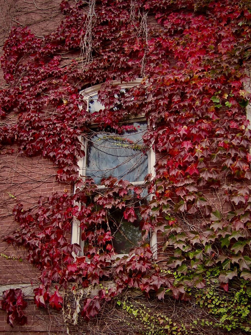 """""""Autumn on the Campus"""" Elizabeth"""