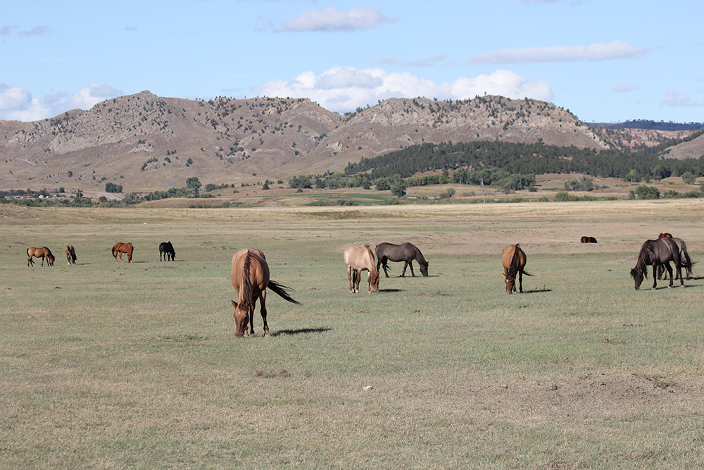 Forever Free, Black Hills Wild Horse Sanctuary Hot Springs, South Dakota