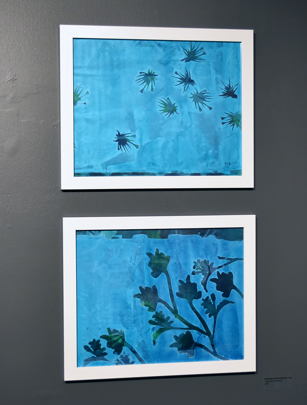 Kimberly Ritchie, Endangered Plant Species: Teal. Cyanotype, silkscreen. 2020.