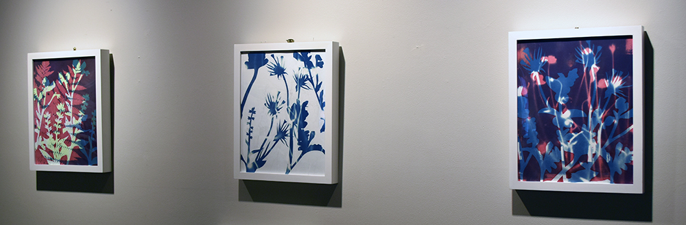 Kimberly Ritchie, Endangered Plant Species III. Cyanotype, silkscreen, silverpoint. 2019.