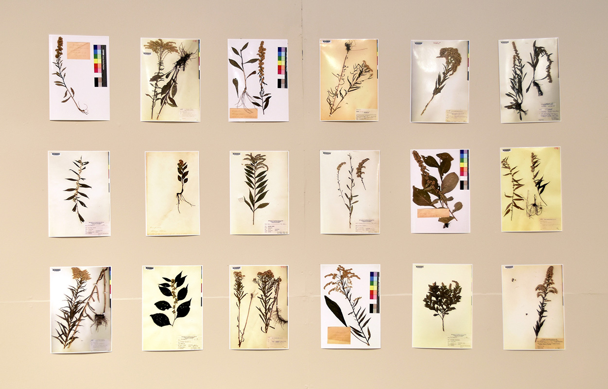 Examples from the PSU Herbarium Collection
