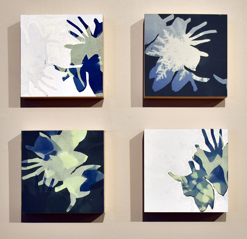 Kimberly Ritchie, Undiscovered Species: Blue. Cyanotype, silkscreen, silverpoint. 2020.