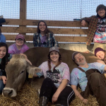 Group of students cuddling a cow